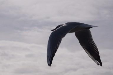 andysveryfavouritseagull