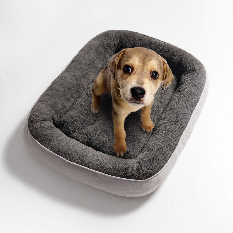 le meilleur panier pour chien