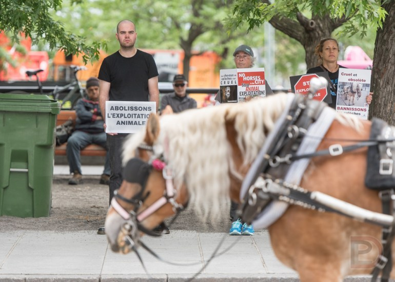 Vigile silencieuse contre les calèches dans le Vieux-Montréal