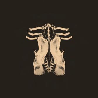 Oktoplut - Pansements