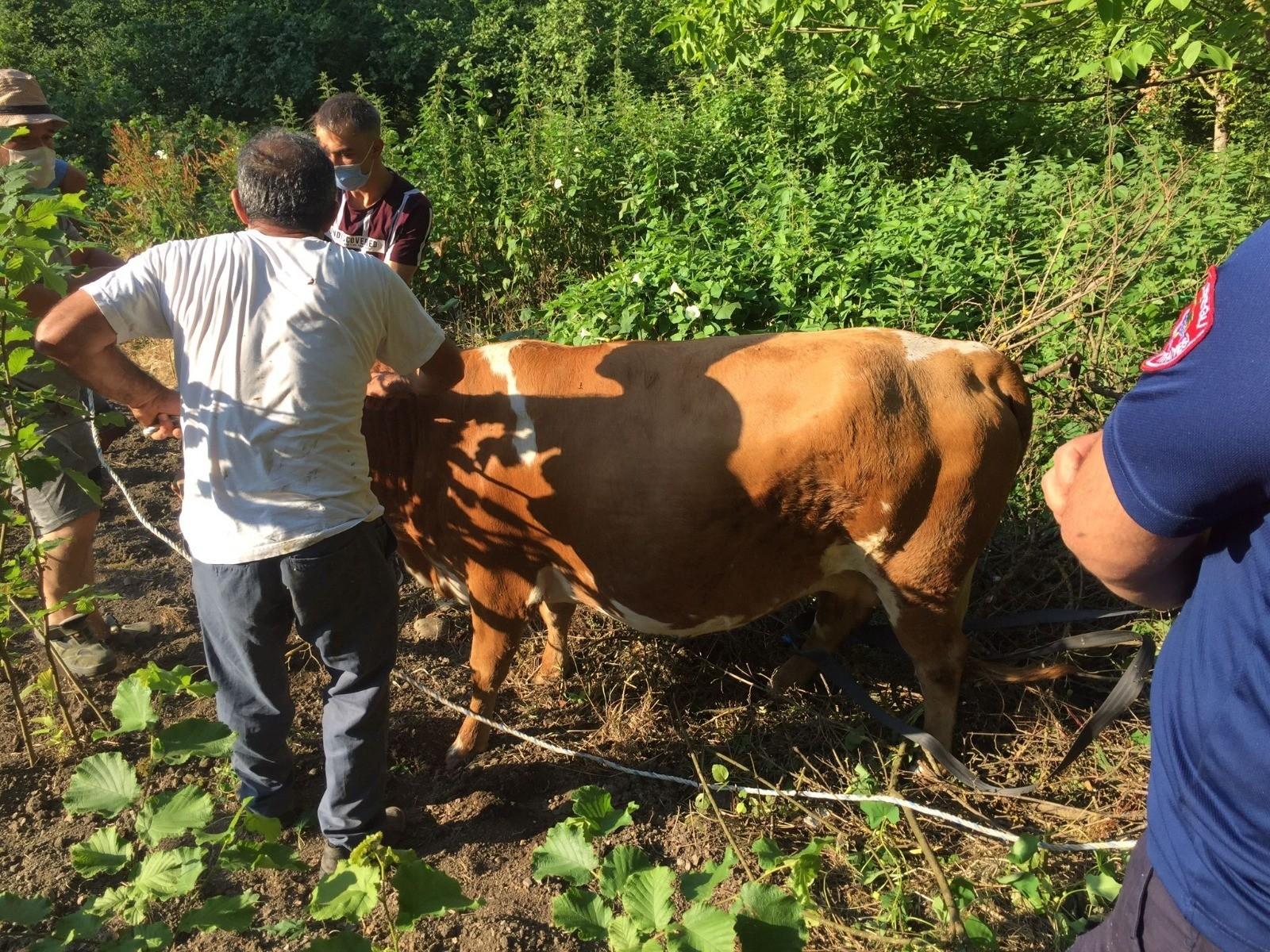 Ağacın arasına sıkışan inek itfaiye ekiplerince kurtarıldı
