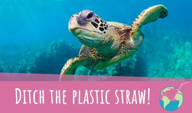 Principles of Eating Green: Pass on the Plastic
