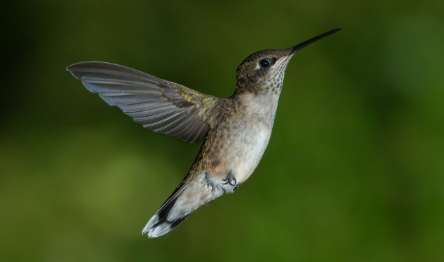 ZooFit Workout of the Day-10/3/19- National Hummingbird (and Butterfly) Day