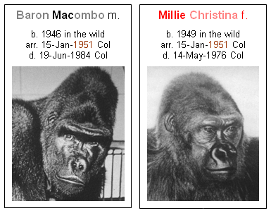 Baron Macombo and Millie Christina arrived in Columbus on January 15, 1951.