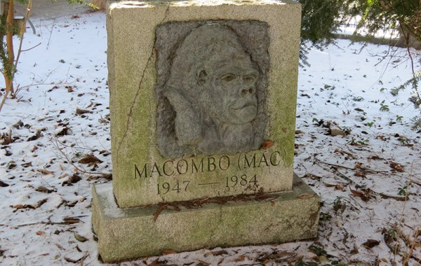 Baron Macombo's grave at the Columbus Zoo