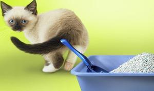 Что делать, если у кота запор. Запор у кота: по секрету всему свету Что делать если у кота запор