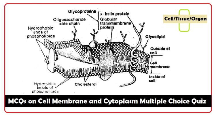 MCQs on Cell Membrane and Cytoplasm Multiple Choice Quiz