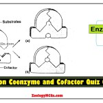 MCQs on Coenzyme and Cofactor Quiz Online