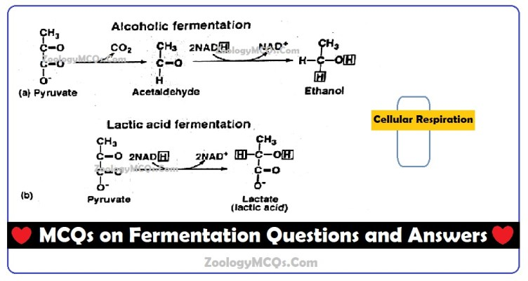 MCQs on Fermentation Questions and Answers