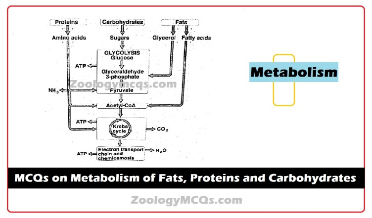 MCQs on Metabolism of Fats, Proteins and Carbohydrates