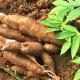 RDC : 500 millions USD d'Afrexim Bank pour relancer l'agriculture ! 14