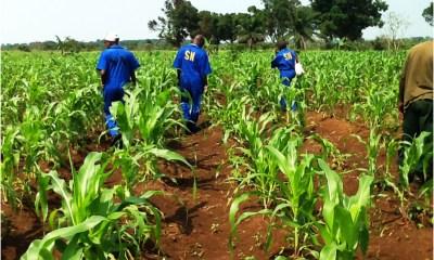 RDC: ODEP dénonce les faibles décaissements de fonds budgétaires alloués à l'agriculture! 1