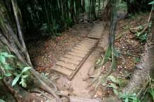 Boardwalk through bamboo forest