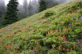 Field of paintbrush and larkspur