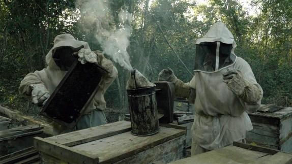 ¿Qué les pasó a las abejas? | Cineteca Nacional