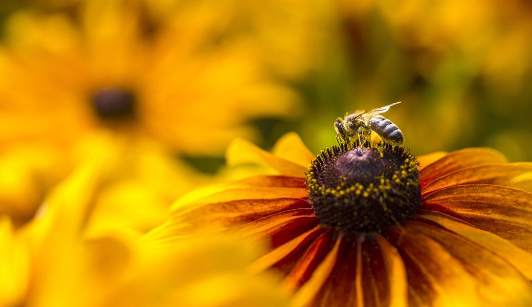 Fotografar a Natureza
