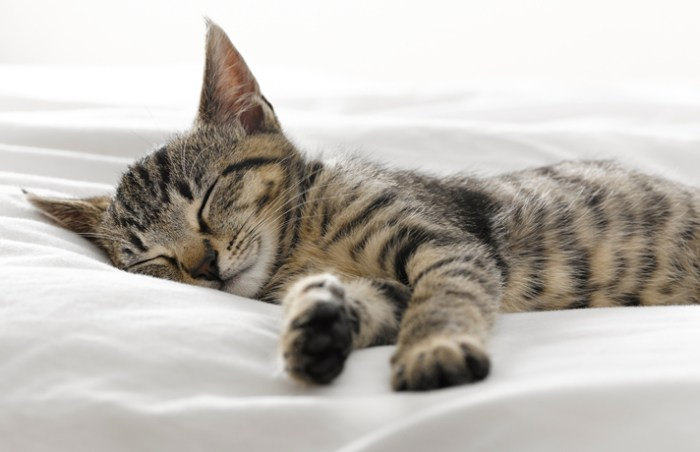 sleep_kitten_1029_JM_SB_LC