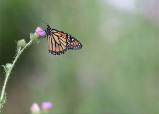 effetto farfalle