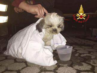 Ciclamino. Il cane salvato a Rescaldina