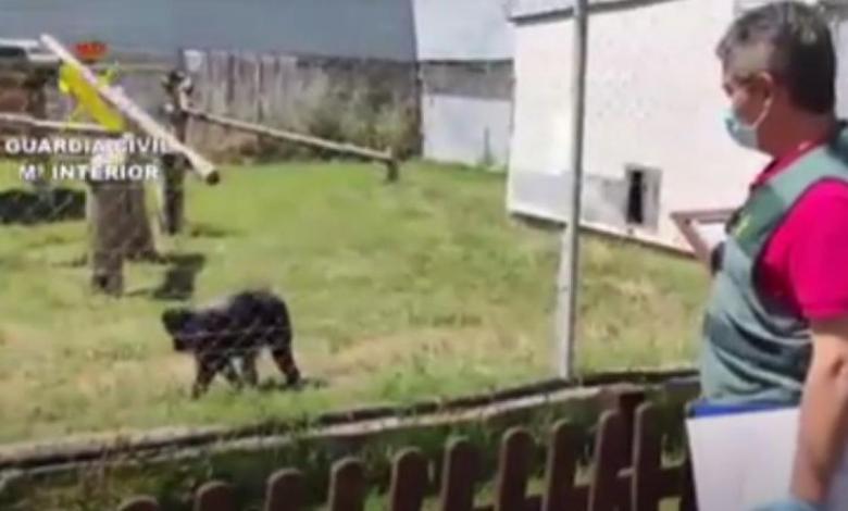 roban-dos-monos-valorados-en-20.000-euros-en-madrid-y-luego-los-abandonan-en-una-parada-de-autobus