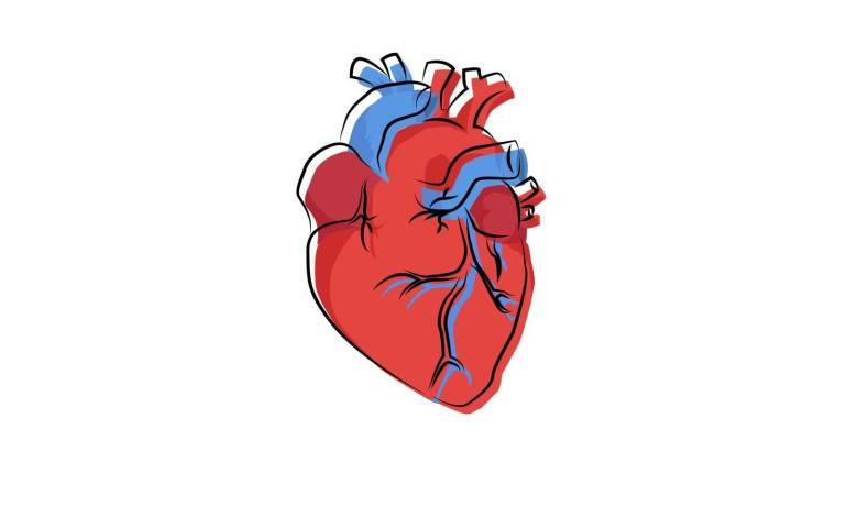 asi-influye-el-latido-del-corazon-a-nuestra-percepcion-del-mundo-exterior