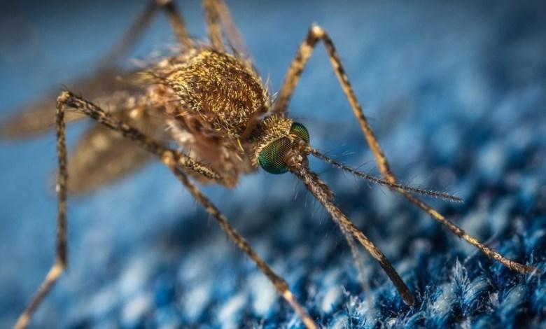 liberar-750-millones-de-mosquitos-modificados-geneticamente,-el-plan-de-florida-para-frenar-la-transmision-de-enfermedades