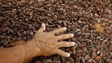 Photo of De las Perseidas al chocolate: cuando se puso a llover cacao en Suiza en pleno 2020