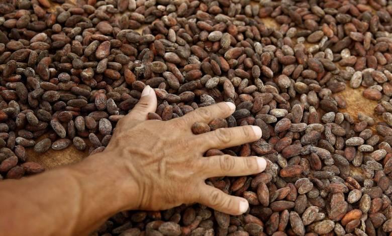 de-las-perseidas-al-chocolate:-cuando-se-puso-a-llover-cacao-en-suiza-en-pleno-2020