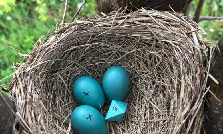 """colocando-""""huevos""""-de-ocho-caras-en-los-nidos:-asi-se-pone-a-prueba-lo-que-los-pajaros-aceptan-en-su-refugio"""