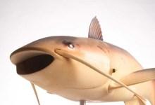 """""""charlie"""",-el-robot-espia-de-la-cia-en-forma-de-pez-que-inspiro-la-exploracion-marina-actual"""