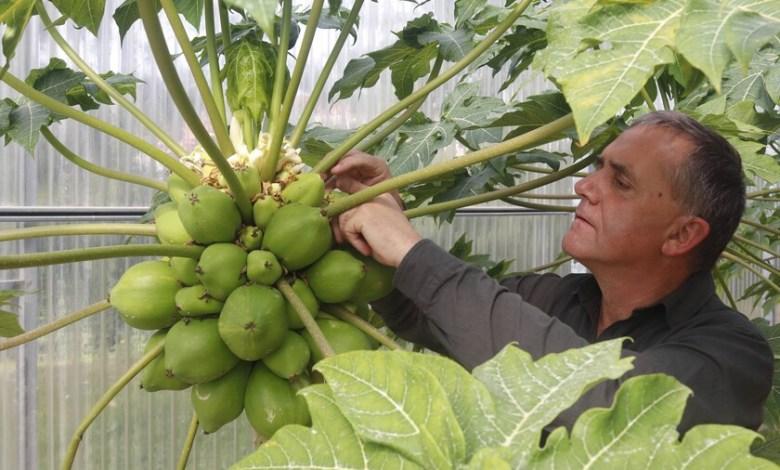 son-espanoles,-consiguieron-que-se-plantara-aguacate-hasta-en-galicia-y-ahora-estan-cultivando-cacao-y-cafe-por-primera-vez-en-europa