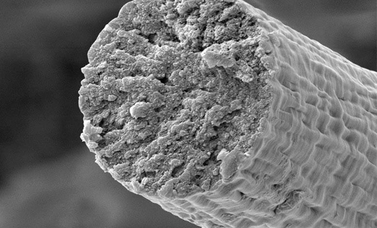 musculos-mas-duros-que-el-kevlar:-crean-a-partir-de-microbios-fibra-muscular-ultrarresistente-y-biocompatible