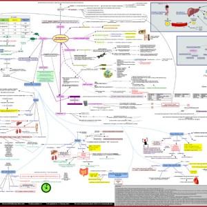 Dyslipidemia_concept_map