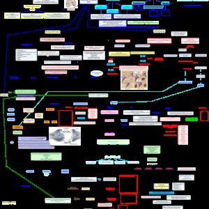Alzheimer's Disease Concept Map