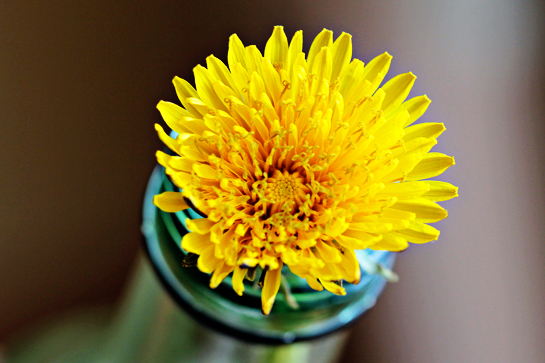 random-joy-flower