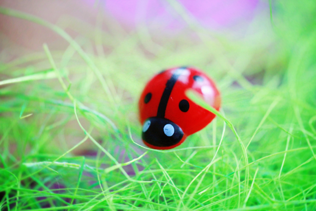 ladybird pin