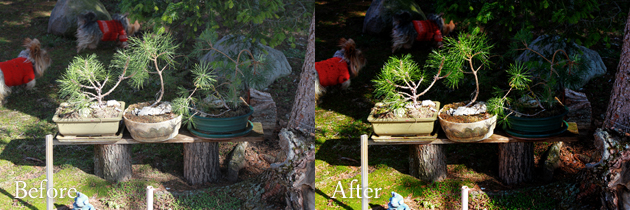 dogs and gardne - rad lab action - before and after