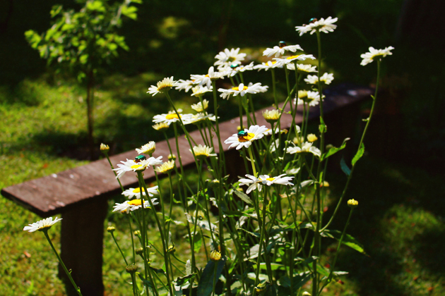 garden 8
