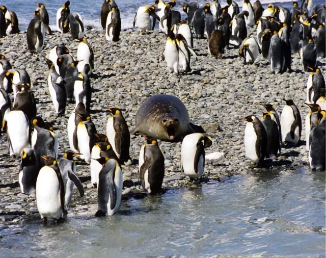 do polar bears eat penguins why dont polar bears eat