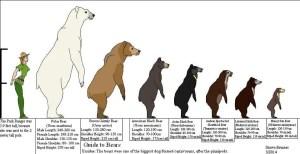 How Big is a Polar Bear