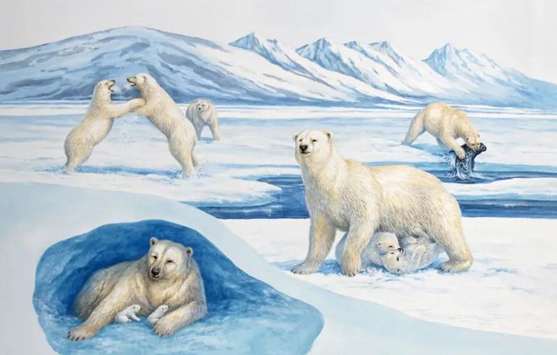 Polar bear life cycle