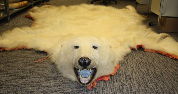 Polar Bear Skin Rug Price
