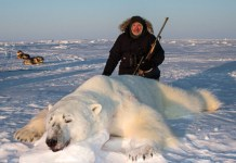 What-Eats-Polar-Bear-Polar-Bear-Predators