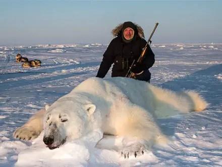 What-Eats-Polar-Bear-Polar-Bear-Predators