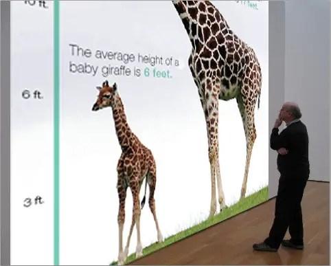 How tall is a baby giraffe