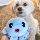 A white fluffy dog poses in front of a blue octopus plush toy.