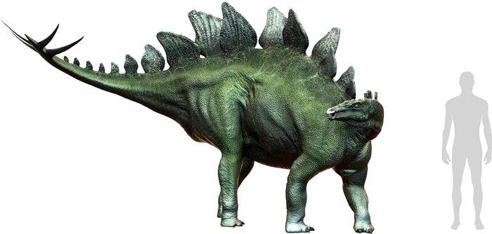 Stegosaurus (Stegosauria). Por Herschel Hoffmeyer   Shutterstock.com