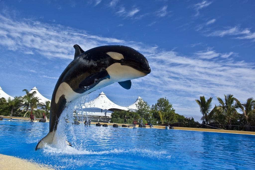 Effective Management of a Killer Whale (Orcinus orca) with Hearing Impairment.
