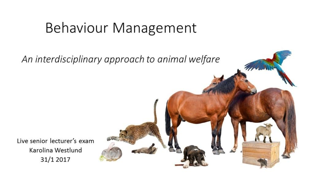 How Behaviour Management Improves Animal Welfare – Karolina Westlund