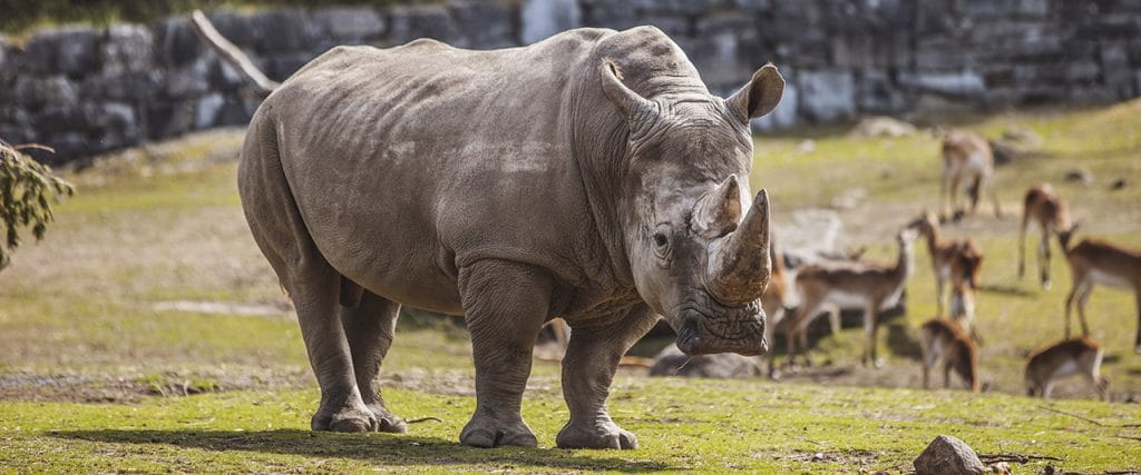 Zoos might just be the difference between life and death for these species